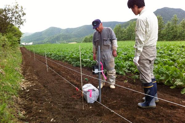 ヒグマによる食害を防ぐため農地に設置された電気柵